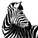 Investec Asset Management