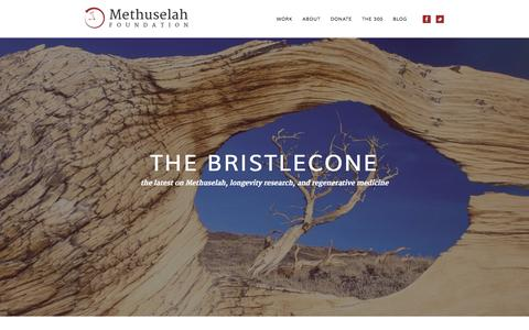 Screenshot of Blog mfoundation.org - The Bristlecone  - the latest on Methuselah, longevity research, and regenerative medicine - captured Oct. 27, 2014