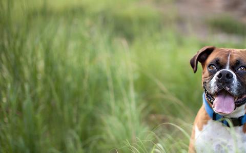Screenshot of Home Page austindogzone.com - Certified Austin Dog Trainer | Austin Dog and Puppy Training - captured Sept. 30, 2014