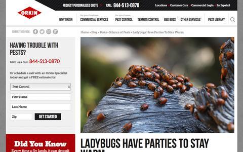 Screenshot of Blog orkin.com - Ladybugs Have Parties To Stay Warm - captured Nov. 1, 2016