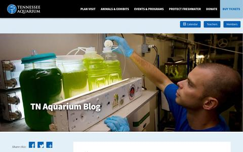 Screenshot of Blog tnaqua.org - Blog | Tennessee Aquarium - captured Feb. 14, 2016