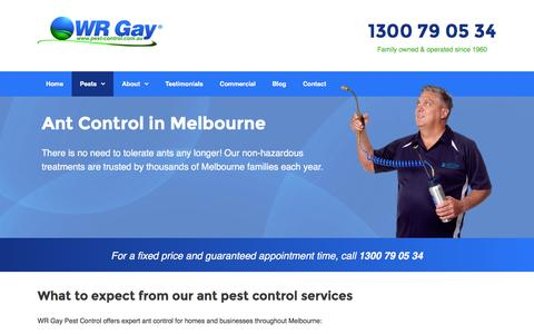 Ant Control in Melbourne, VIC - Pest Control Experts | WR Gay