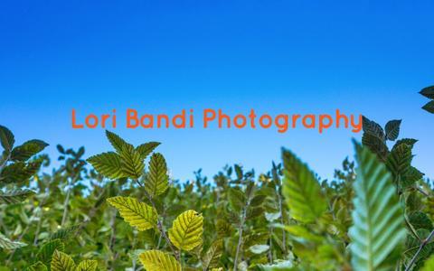 Screenshot of Home Page loribandi.com - Lori Bandi Photography - Lori Bandi Photography - captured Oct. 3, 2014
