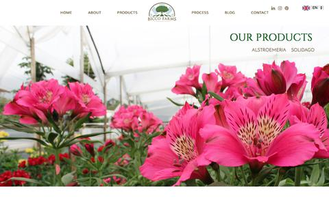 Screenshot of Products Page biccofarms.com - Welcome to Bicco Farms | Grower and exporter specialty Alstroemeria - captured June 1, 2017