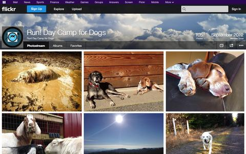 Screenshot of Flickr Page flickr.com - Flickr: Run! Day Camp for Dogs' Photostream - captured Oct. 26, 2014