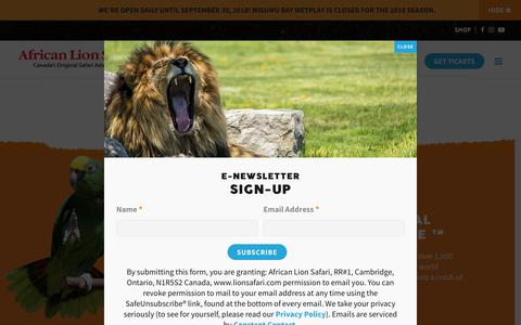 Screenshot of About Page lionsafari.com - About | African Lion Safari - Cambridge Ontario - captured Sept. 22, 2018