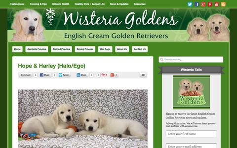 Screenshot of Testimonials Page wisteriagoldens.com - Testimonials Archives - Wisteria Goldens - captured Aug. 14, 2016