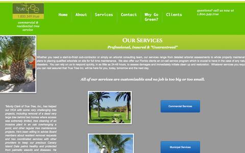 Screenshot of Services Page truetreeinc.com - Services - captured Aug. 17, 2015