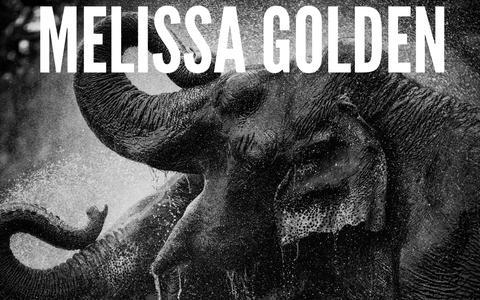 Screenshot of Home Page melissagolden.com - Home - Melissa Golden - Photographer - Atlanta, GA - captured Oct. 17, 2018