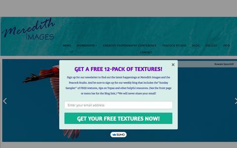 Screenshot of Home Page meredithimages.com captured Sept. 20, 2018