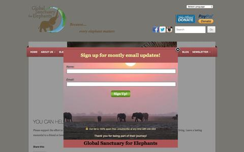 Screenshot of Support Page globalelephants.org - You Can Help | GLOBAL SANCTUARY FOR ELEPHANTS - captured Jan. 11, 2017