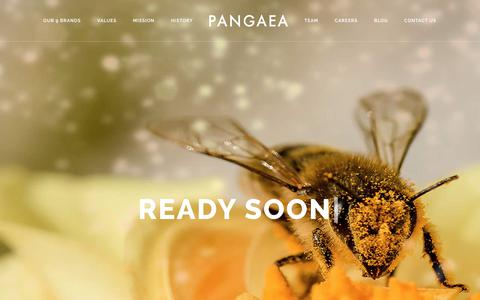Screenshot of Team Page pangaea.co.uk - Coming Soon Bee – Pangaea - captured July 13, 2017