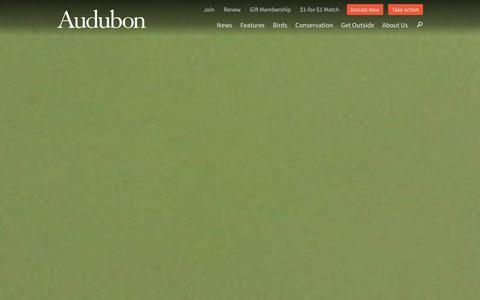 Screenshot of Home Page audubon.org - National Audubon Society - captured Dec. 22, 2015