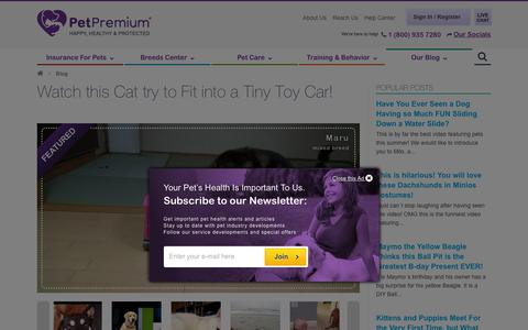 Screenshot of Blog petpremium.com - Pet lovers' community | Blog | PetPremium - captured Oct. 15, 2015