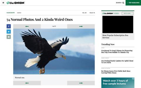 74 Normal Photos And 2 Kinda Weird Ones - The Onion - America's Finest News Source