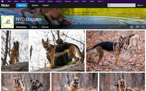 Screenshot of Flickr Page flickr.com - Flickr: NYCDoggies' Photostream - captured Oct. 26, 2014