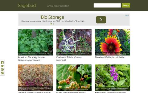 Screenshot of Home Page sagebud.com - Sagebud | Grow Your Garden | Plant a Tree | Pot a Flower | Sow a Seed - captured Sept. 28, 2015