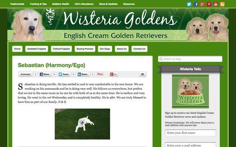 Screenshot of Testimonials Page wisteriagoldens.com - Testimonials Archives - Wisteria Goldens - captured Oct. 26, 2014