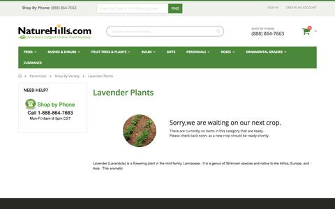 Lavender Plants | Buy Online at Nature Hills Nursery