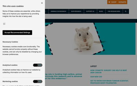 Screenshot of About Page animalfreeresearchuk.org - Mission, vision, values - Animal Free Research UK - captured July 8, 2018