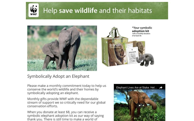 Symbolically Adopt an Elephant With a Monthly Gift | World Wildlife Fund